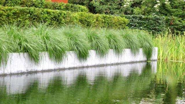 Démarrage d'une nouvelle eau d'étang