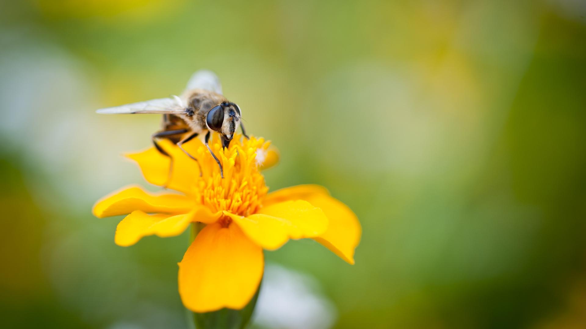 Für mehr Insektenvielfalt im Garten