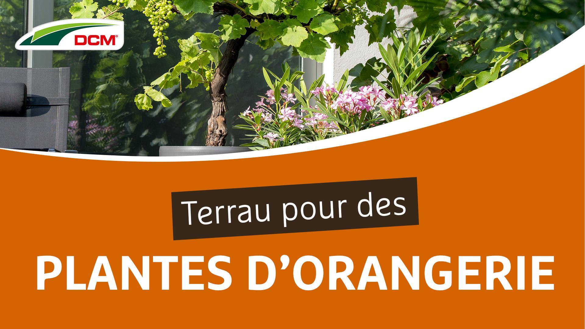 Terreaux pour plantes d'orangerie et plantes méditerranéennes - DCM Plantes d'Orangerie & Plantes mediterranéennes