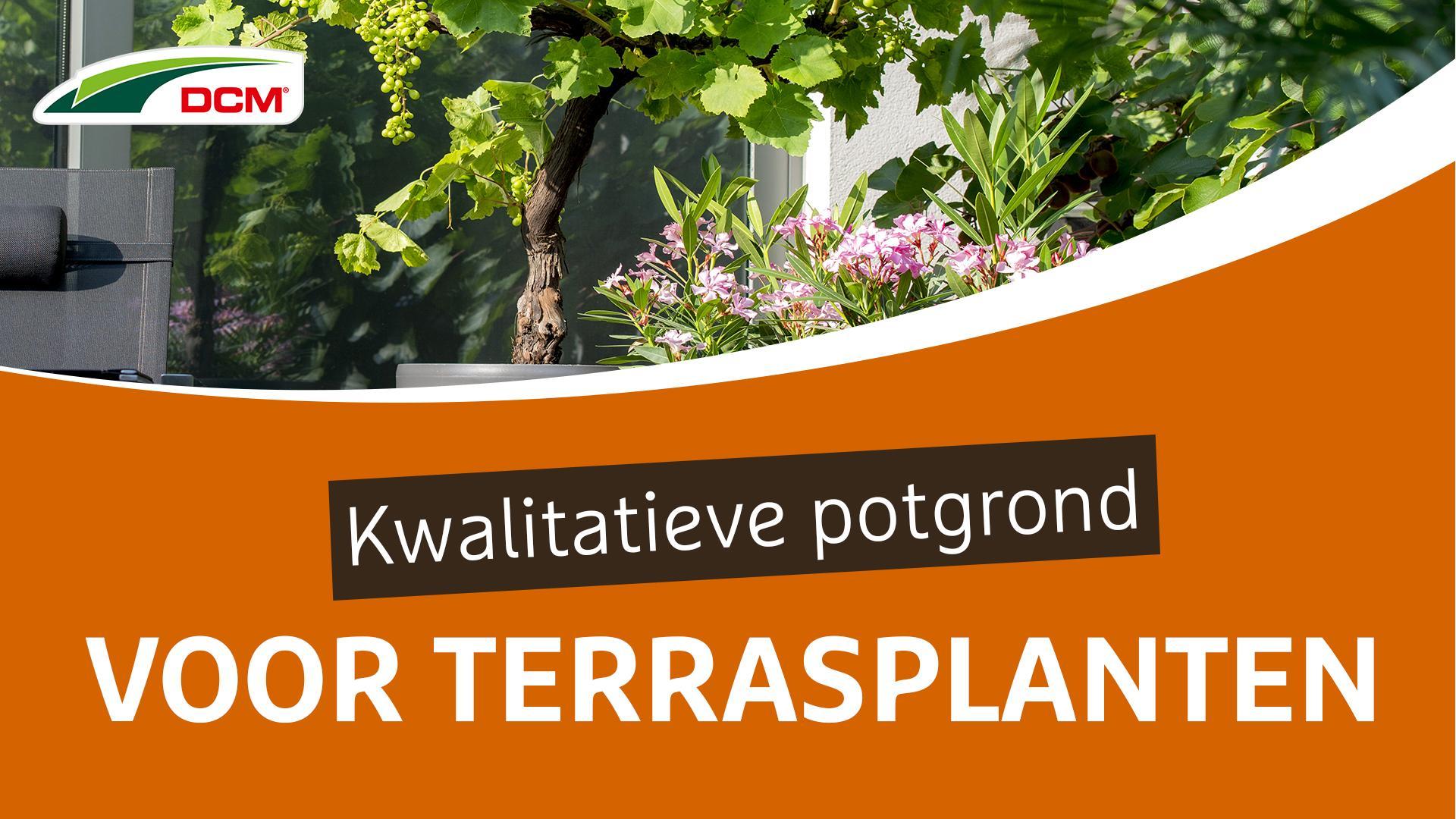 Kwalitative potgrond voor terrasplanten - DCM Ecoterra® Terrasplanten & Mediterrane Planten
