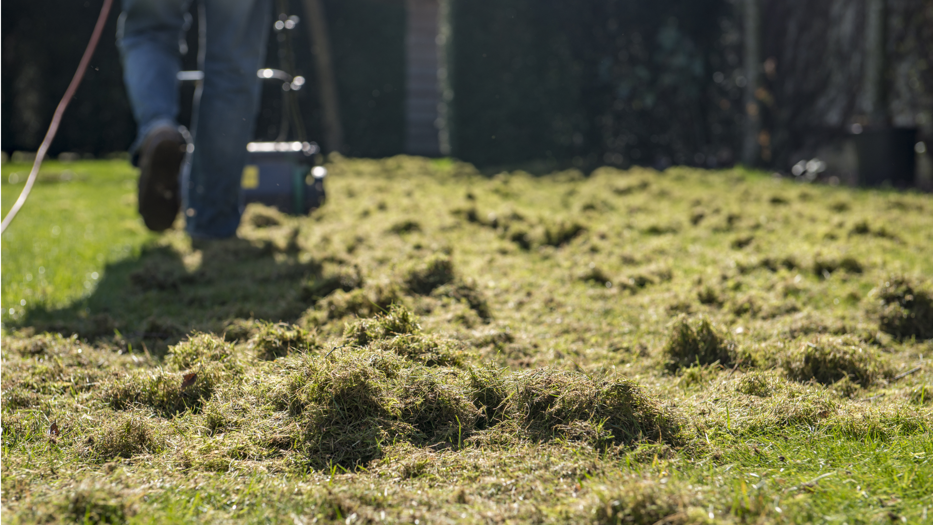 Rasen vertikutieren: Darauf sollten Sie achten