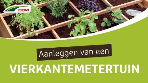 Aanleggen van een vierkantemetertuin - DCM Vivimus® Groenten & Fruit