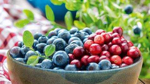 Kweek zelf lekkere en gezonde bessen
