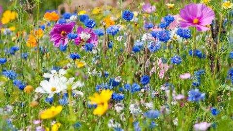 Trek nuttige insecten aan in uw tuin