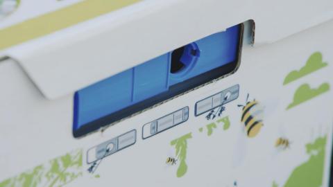 Une ruche à bourdons pour une bonne pollinisation au jardin - DCM Bumblebee nest