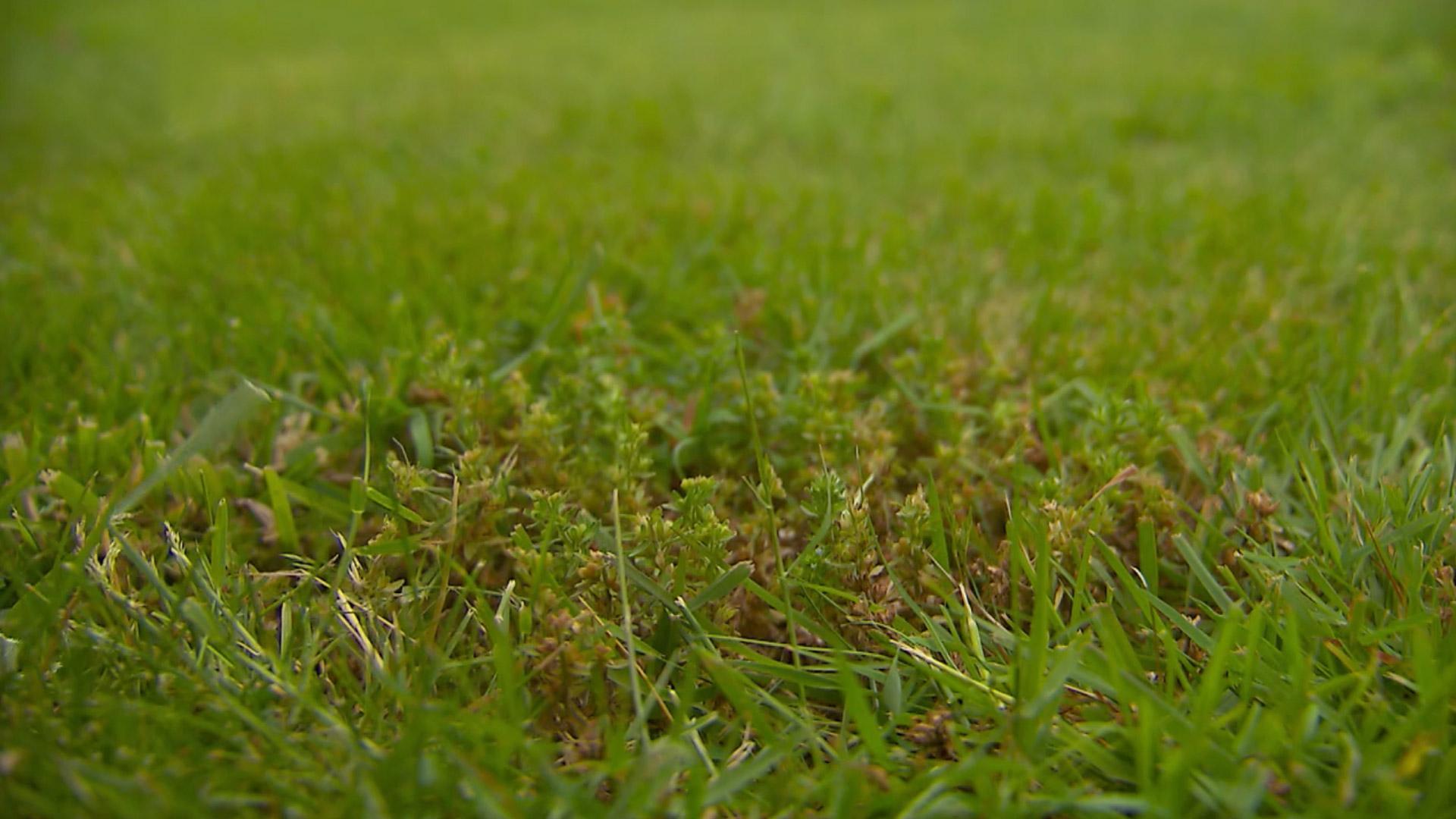 Engrais organique qui combat et élimine la mousse - DCM Gazon Pur®