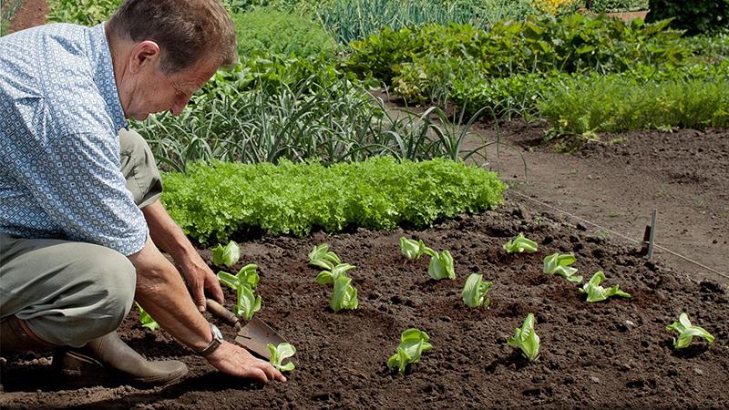 Revitalisez le sol de votre potager!