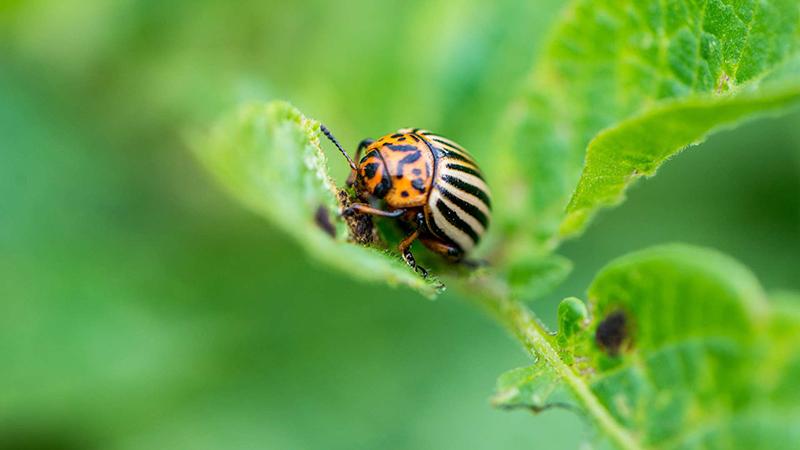 Herken de insecten in je tuin en bescherm je planten