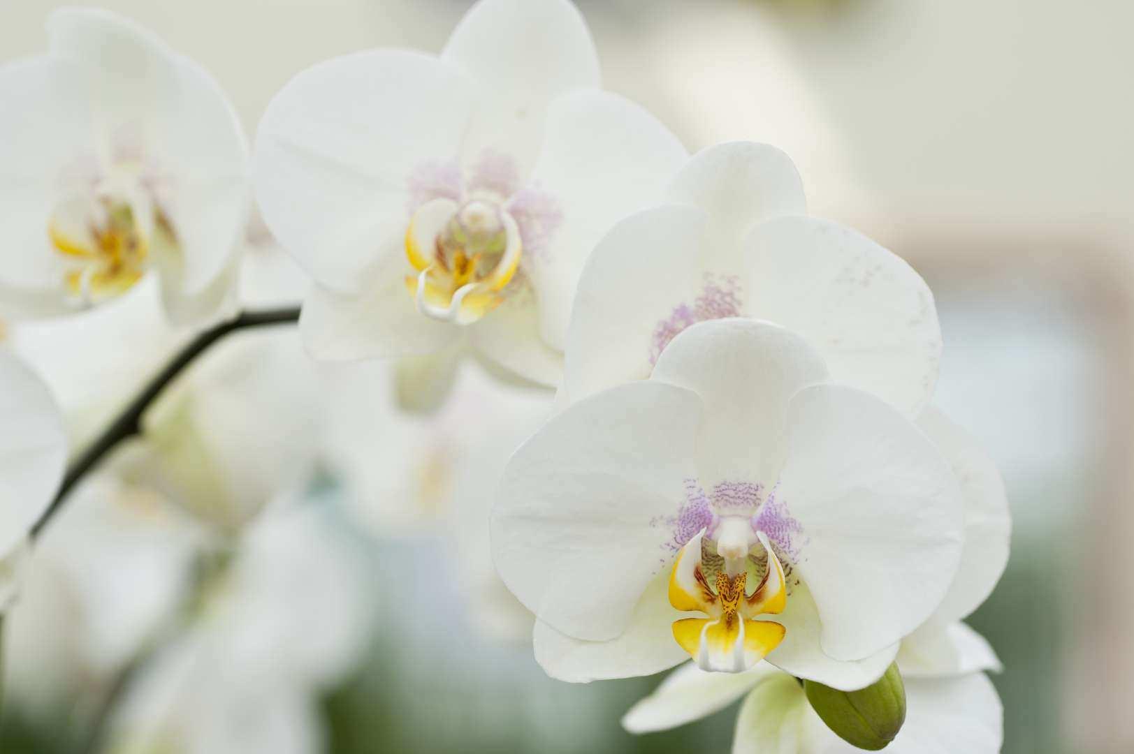 Un substrat appropri pour chaque orchid e dcm - Terreau pour orchidee ...