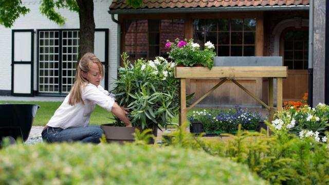 Planten in potten op het terras