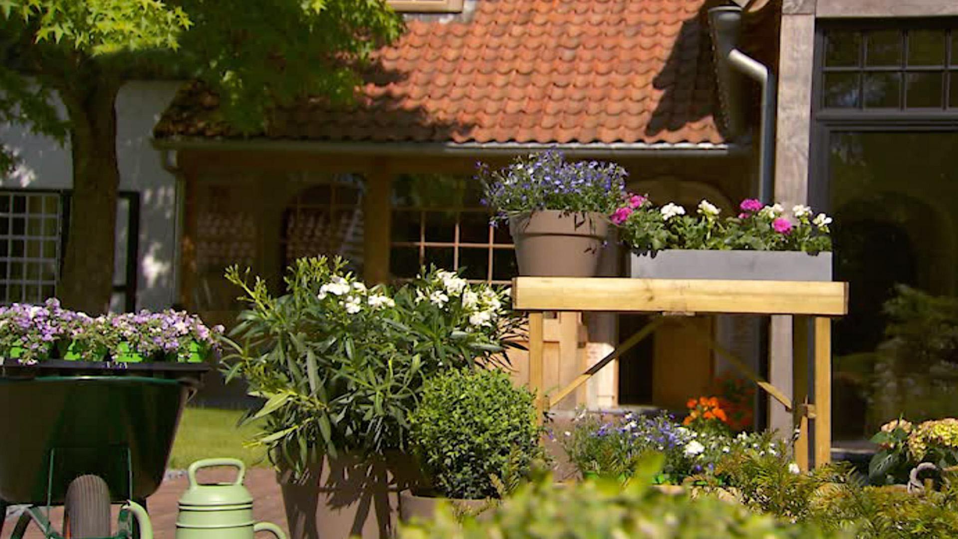 Kwalitatieve potgrond voor terrasplanten - DCM Ecoterra® Terrasplanten & Mediterrane Planten