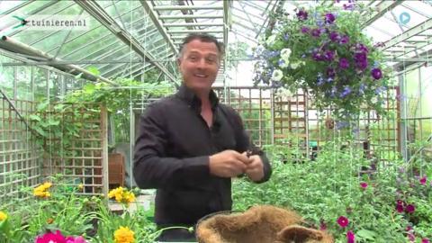 Kamerplanten verzorging en bemesten