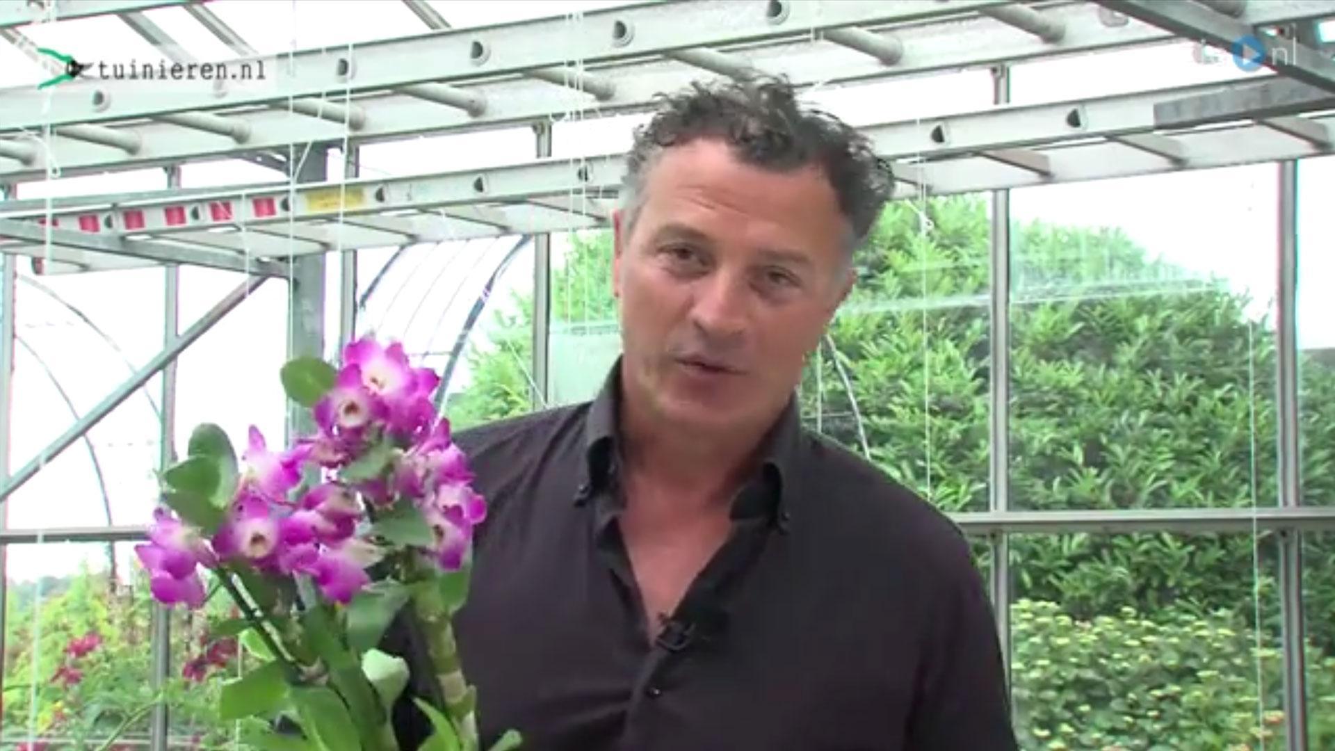 Orchidee verzorgen en water geven