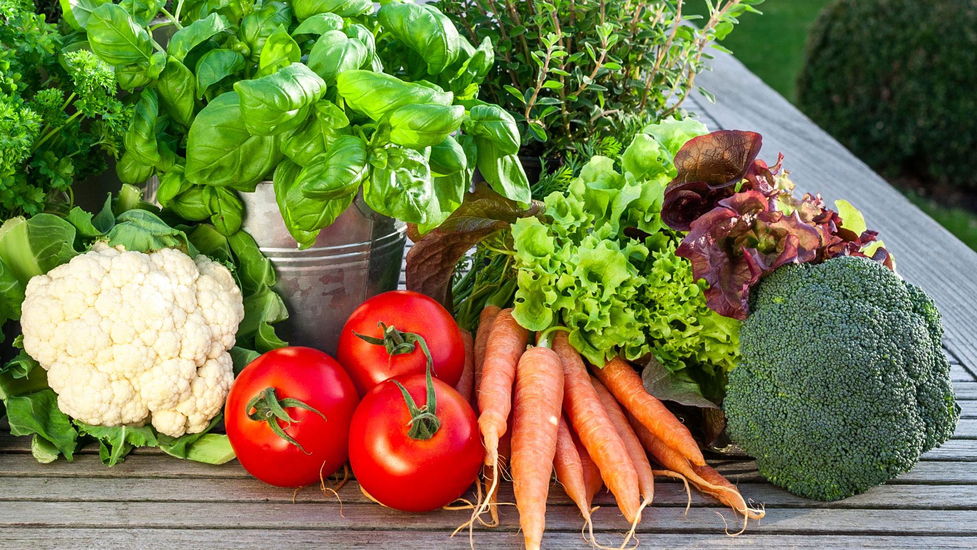 Groenten dcm for Groenten tuin
