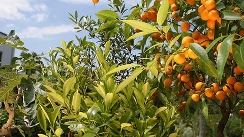 Plante méditerranéenne