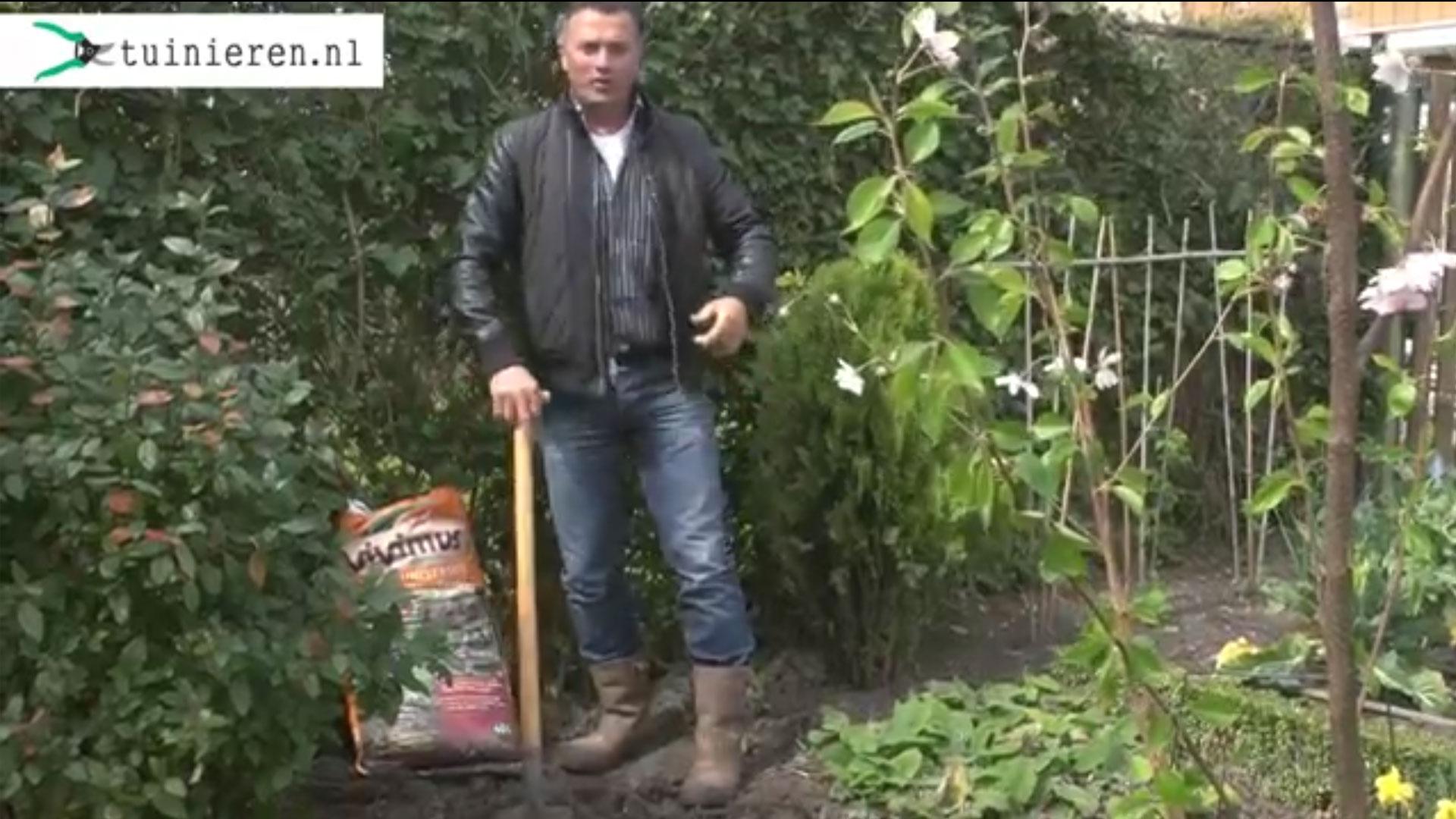 Boom planten of struik planten