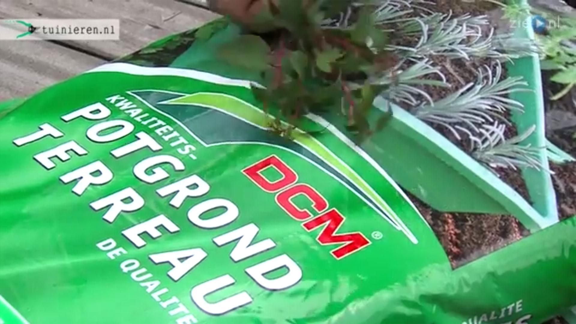 Stekken maken van planten