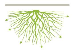 Verbeterde wortelontwikkeling
