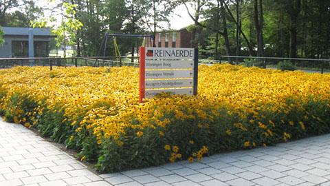 Wat doen vaste planten voor de stad?