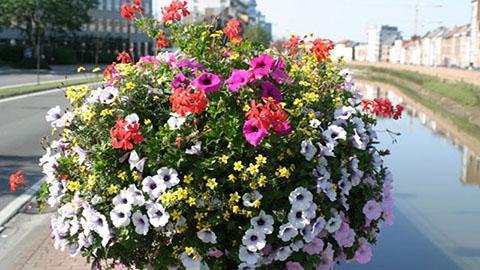 fleurs en pot free fleurs de balcon with fleurs en pot fleurs en pot with fleurs en pot. Black Bedroom Furniture Sets. Home Design Ideas