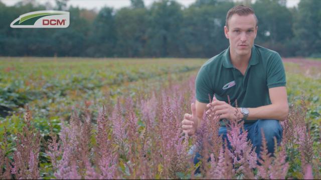 DCM in de vaste planten teelt