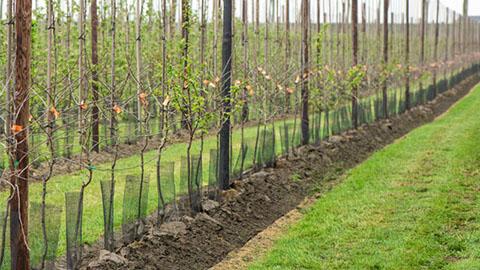Plant fruitbomen succesvol aan met DCM Vivimus®!