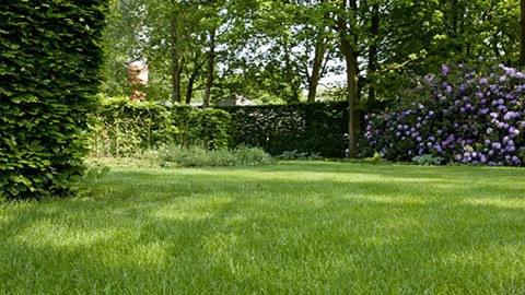 Stappenplan voor een dichte en sterke grasmat in de winter