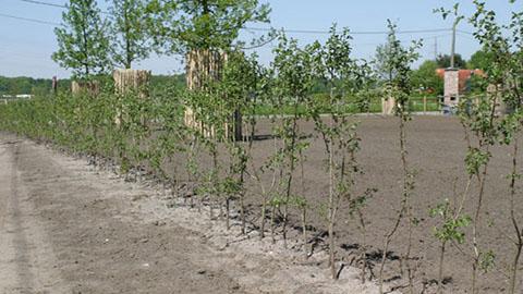 DCM VIVIMUS®  professioneel advies voor het aanplanten van hagen