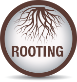 Improved rooting