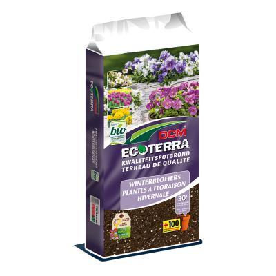 DCM Ecoterra® Plantes à floraison hivernale